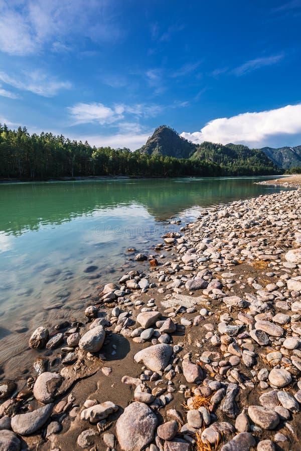 Θερινό τοπίο στον ποταμό Katun Altai, νότια Σιβηρία, RU στοκ εικόνες