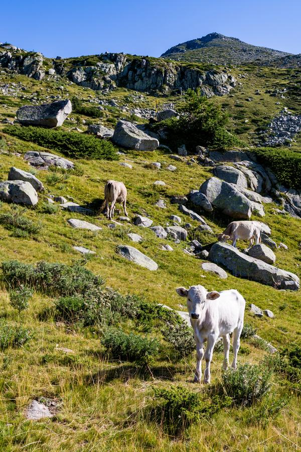Θερινό τοπίο τοπίου, βουνό Pirin, Βουλγαρία στοκ εικόνες