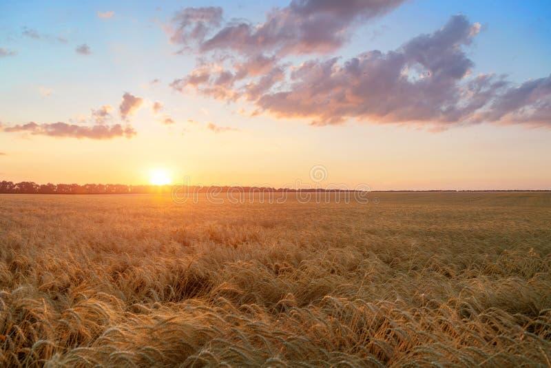 Θερινό τοπίο του ηλιοβασιλέματος τομέων συγκομιδών σίτου στοκ φωτογραφίες