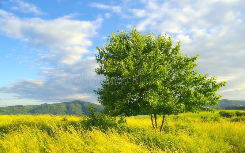 Θερινό τοπίο στοκ φωτογραφία