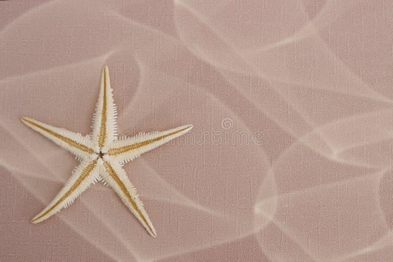 Θερινό υπόβαθρο: αστερίας στοκ εικόνες
