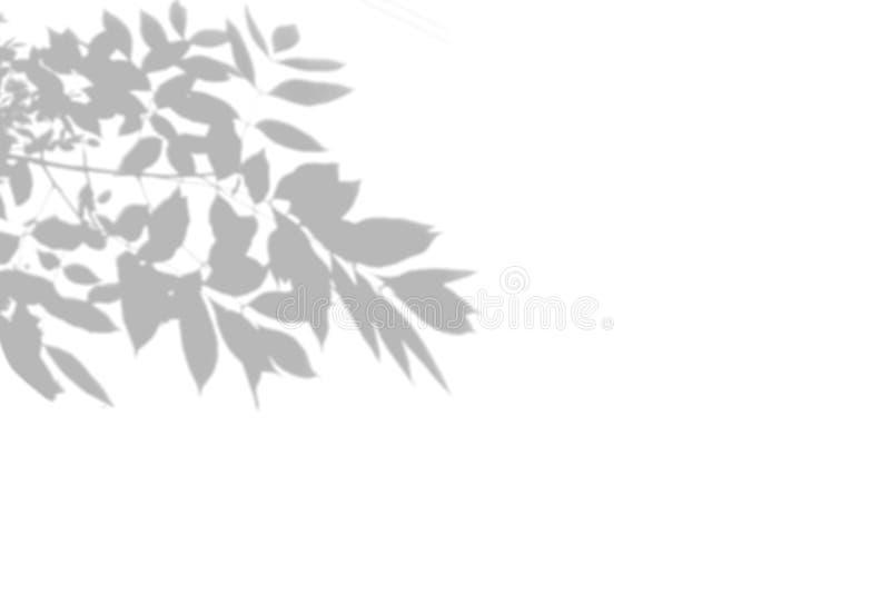 Θερινό υπόβαθρο του δέντρου σκιών σε έναν άσπρο τοίχο E διανυσματική απεικόνιση