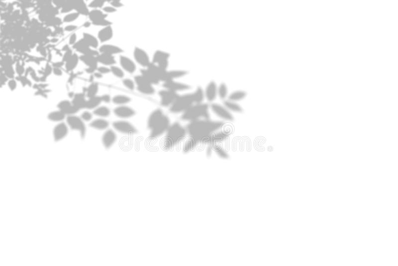 Θερινό υπόβαθρο του δέντρου σκιών σε έναν άσπρο τοίχο E ελεύθερη απεικόνιση δικαιώματος