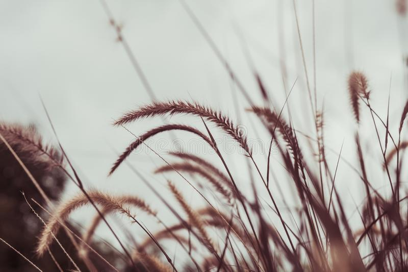 Θερινό υπόβαθρο, τρύγος ηλιοβασιλέματος λουλουδιών χλόης στοκ εικόνες με δικαίωμα ελεύθερης χρήσης