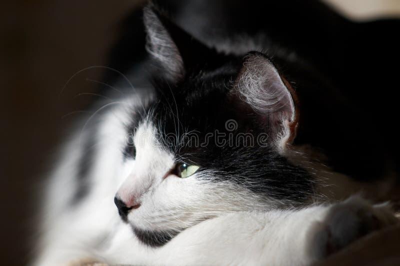 Download θερμαμένος γάτα ήλιος στοκ εικόνες. εικόνα από αυτιά, ήρεμος - 1529900