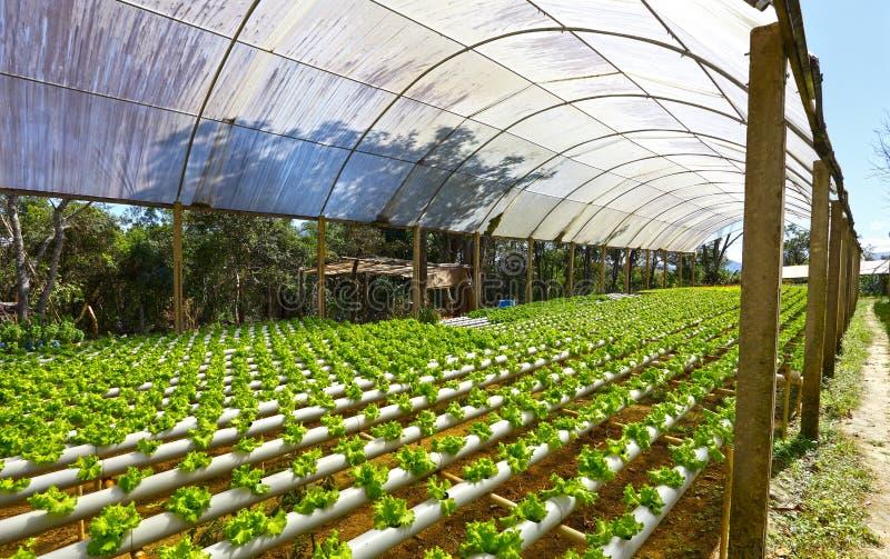 Θερμοκήπιο για hydroponics στοκ φωτογραφία με δικαίωμα ελεύθερης χρήσης