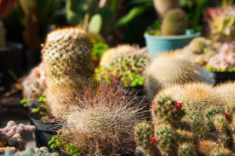 Θερμοκήπιο κήπων με ποικίλα λουλούδια στοκ φωτογραφίες