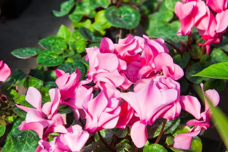 Θερμοκήπιο κήπων με ποικίλα λουλούδια στοκ φωτογραφίες με δικαίωμα ελεύθερης χρήσης