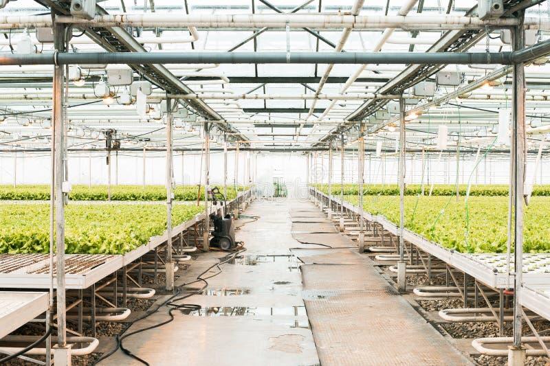 Θερμοκήπιο και πράσινο λαχανικό στοκ φωτογραφία με δικαίωμα ελεύθερης χρήσης