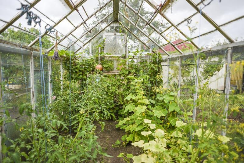 Θερμοκήπιο σε έναν εγχώριο κήπο στοκ εικόνα με δικαίωμα ελεύθερης χρήσης