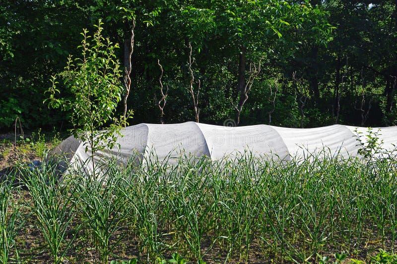 Θερμοκήπιο στον κήπο στοκ φωτογραφίες