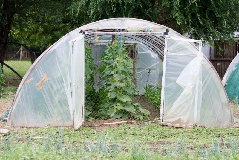 Θερμοκήπιο στον κήπο στοκ εικόνες με δικαίωμα ελεύθερης χρήσης
