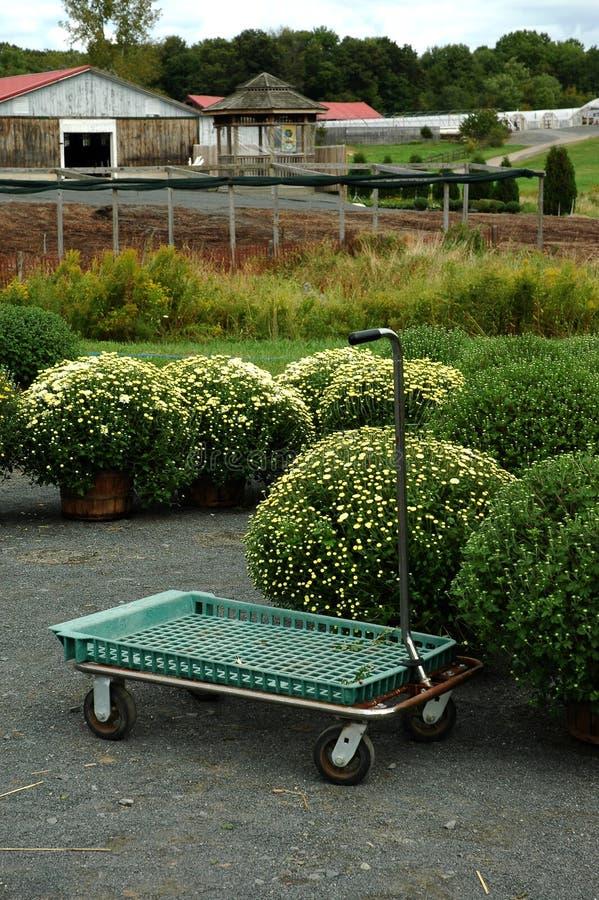 Download θερμοκήπιο στοκ εικόνα. εικόνα από φυτό, καλλιέργεια, κάθετος - 378689