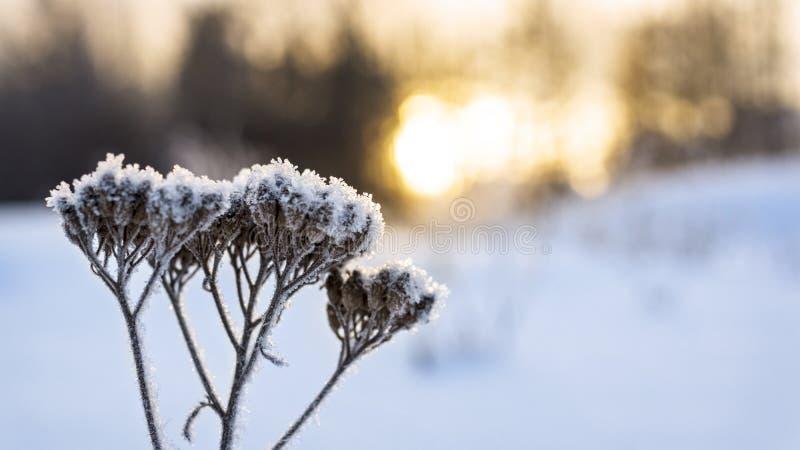 Θερμό ηλιοβασίλεμα τον κρύο χειμώνα στοκ φωτογραφίες με δικαίωμα ελεύθερης χρήσης