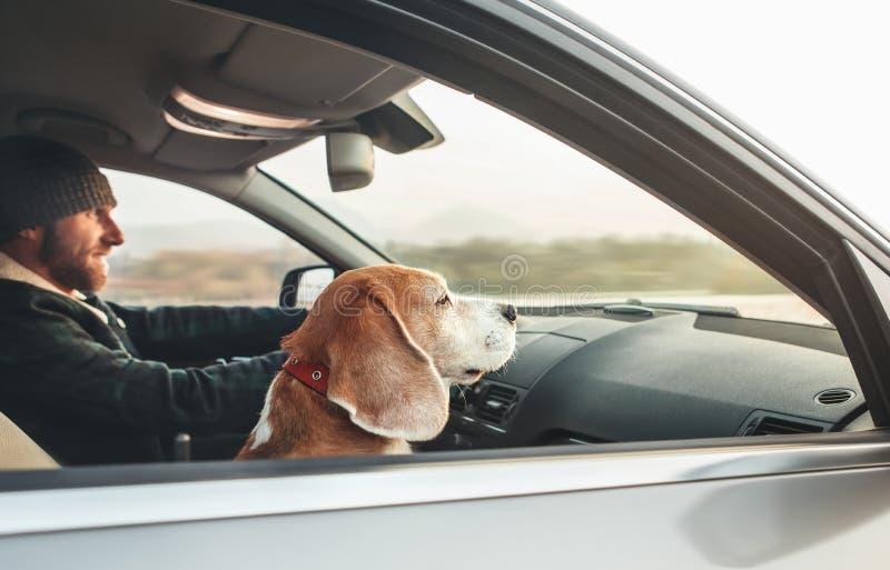 Θερμό ντυμένο άτομο που απολαμβάνει τη σύγχρονη οδήγηση αυτοκινήτων με το λαγωνικό του στοκ φωτογραφία