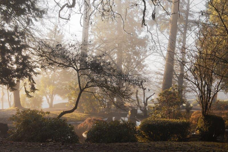 Θερμό ομιχλώδες πρωί στοκ εικόνες