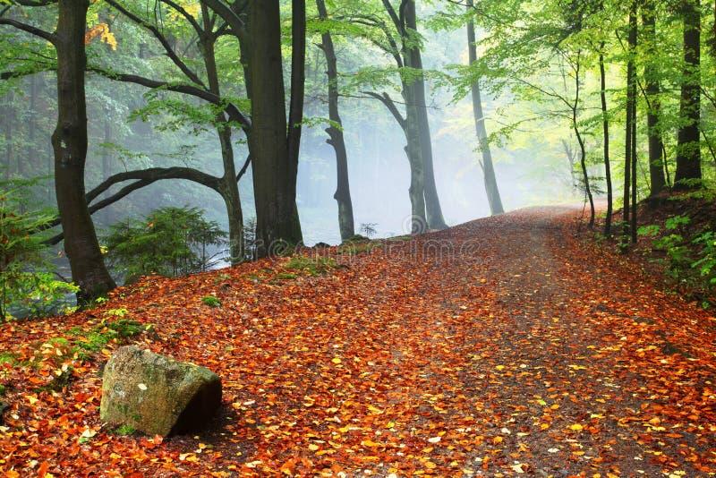 Θερμό τοπίο φθινοπώρου ή καλοκαιριού σε ένα δάσος με τον ήλιο που πετά τις όμορφες ακτίνες του φωτός μέσω της υδρονέφωσης και των στοκ εικόνες με δικαίωμα ελεύθερης χρήσης