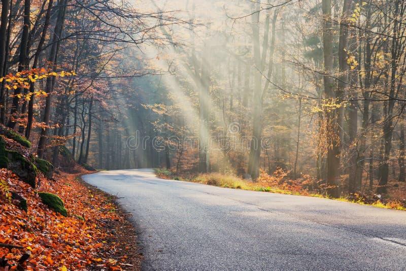 Θερμό τοπίο φθινοπώρου σε ένα δάσος, με τον ήλιο που πετά τις όμορφες ακτίνες του φωτός μέσω της υδρονέφωσης και των δέντρων στοκ φωτογραφία
