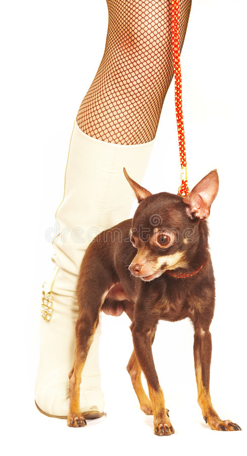 Download θηλυκά πόδια σκυλιών στοκ εικόνες. εικόνα από αισθησιασμός - 2232340