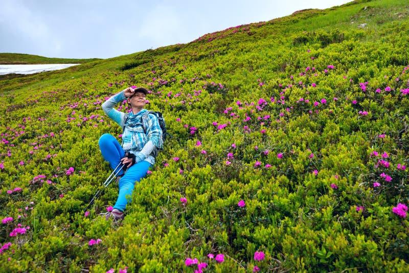 Θηλυκή χαλάρωση τυχοδιωκτών μεταξύ ανθίζοντας rhododendrons στοκ εικόνες
