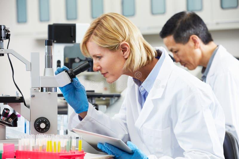 Θηλυκός επιστήμονας που χρησιμοποιεί τον υπολογιστή ταμπλετών στο εργαστήριο στοκ φωτογραφία με δικαίωμα ελεύθερης χρήσης
