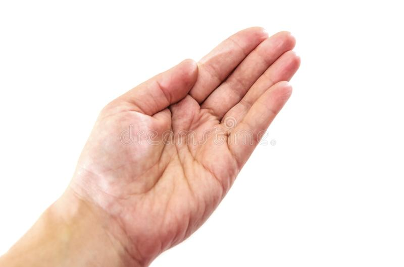Θηλυκός φοίνικας που απομονώνεται στο άσπρο υπόβαθρο E στοκ φωτογραφία με δικαίωμα ελεύθερης χρήσης