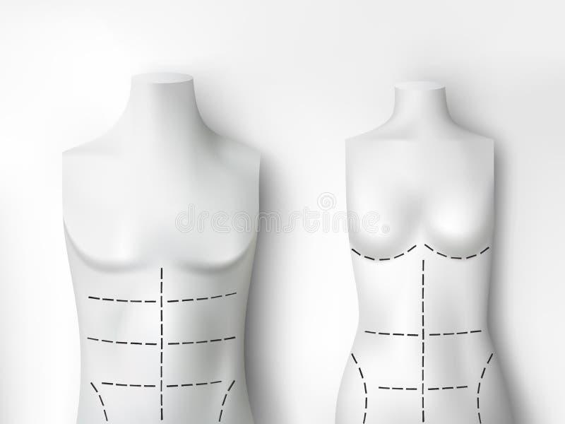 θηλυκό αρσενικό διάνυσμα διανυσματική απεικόνιση