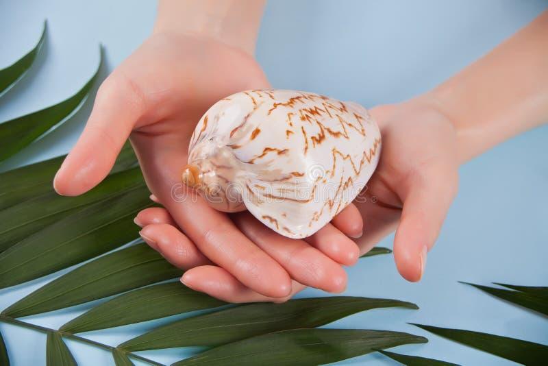 Θηλυκό χέρι που κρατά το όμορφο ζωηρόχρωμο εξωτικό θαλασσινό κοχύλι με την εκλεκτική εστίαση στο μπλε ξύλινο υπόβαθρο Σκηνικό θερ στοκ φωτογραφίες με δικαίωμα ελεύθερης χρήσης