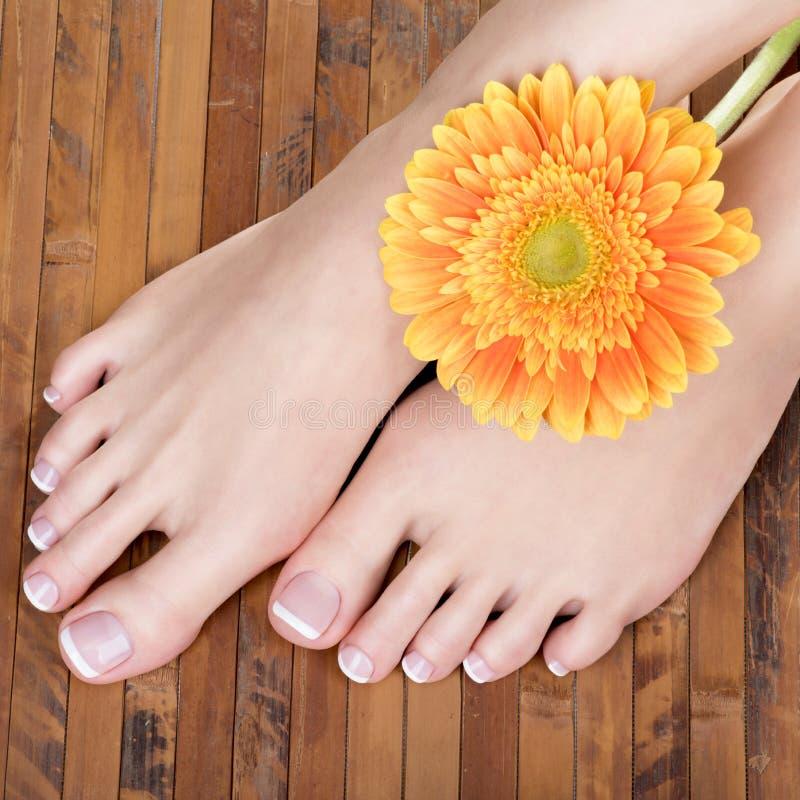 Θηλυκά πόδια με το άσπρο γαλλικό pedicure στα καρφιά Στο σαλόνι SPA στοκ εικόνα