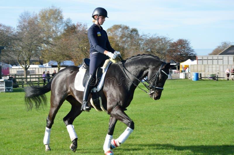 Θηλυκός αναβάτης στη εκπαίδευση αλόγου σε περιστροφές που εκπαιδεύει τη Ιστ Άνγκλια στοκ εικόνα