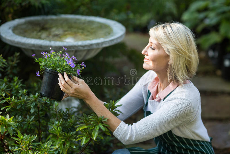 Θηλυκός κηπουρός που κρατά τα σε δοχείο λουλούδια εργαζόμενος στοκ φωτογραφία με δικαίωμα ελεύθερης χρήσης