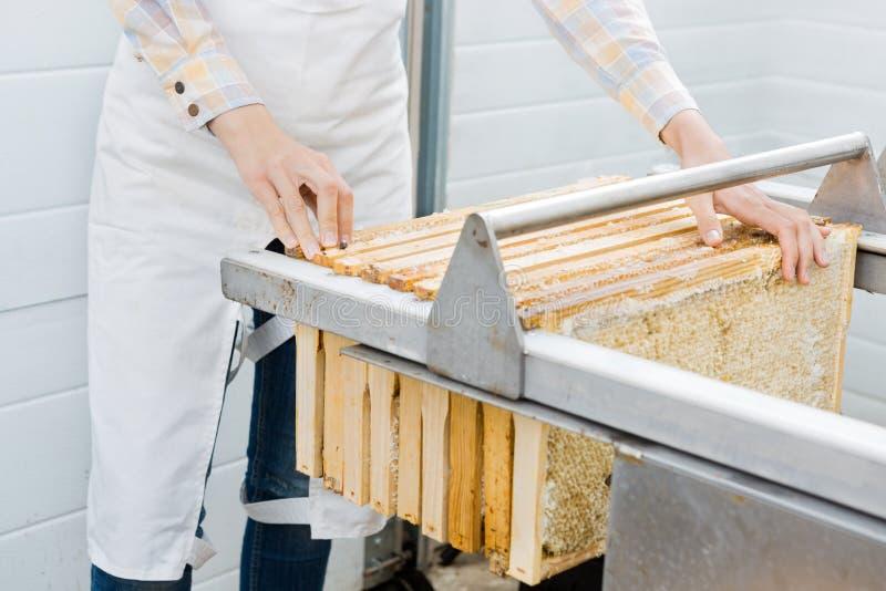 Θηλυκός μελισσοκόμος που συλλέγει τις κηρήθρες από στοκ εικόνες με δικαίωμα ελεύθερης χρήσης