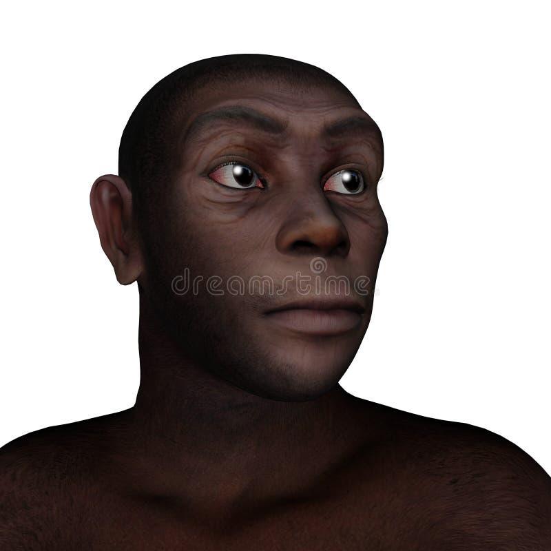 Θηλυκό πορτρέτο erectus ανθρώπων - τρισδιάστατο δώστε διανυσματική απεικόνιση