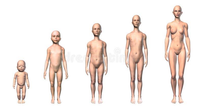 Θηλυκό σχέδιο ανθρώπινων σωμάτων των διαφορετικών σταδίων ηλικιών. ελεύθερη απεικόνιση δικαιώματος