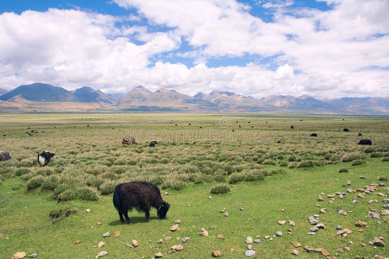 Θιβετιανό τοπίο στοκ εικόνες με δικαίωμα ελεύθερης χρήσης