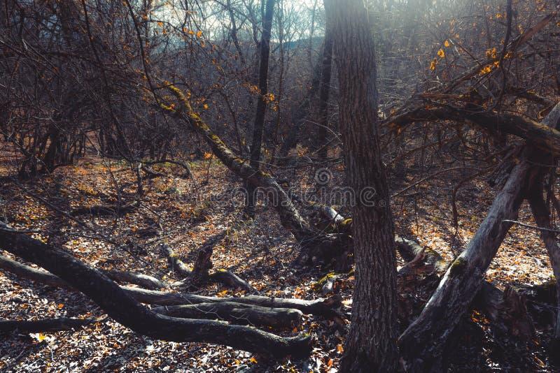 Θλιβερό δάσος στοκ εικόνες