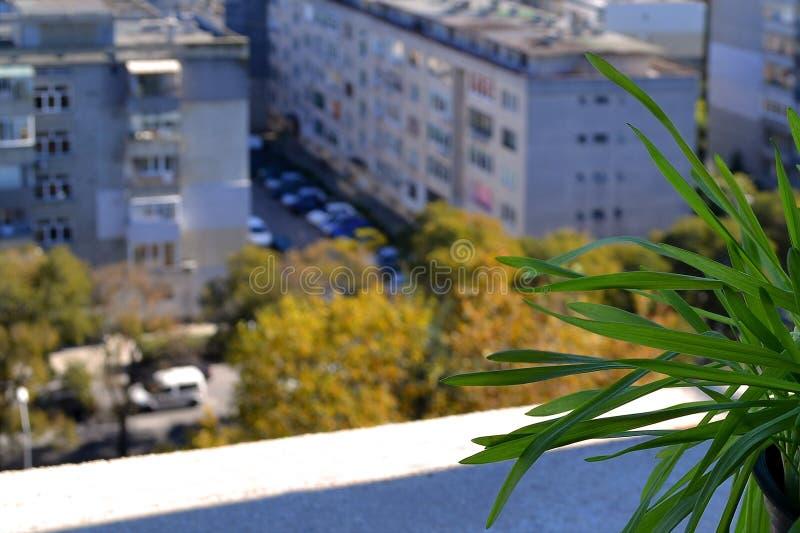 Θολωμένη άποψη της ηλιόλουστης οδού πόλεων φθινοπώρου με τα κίτρινα δέντρα από ένα παράθυρο δαπεδώνω-tenth-floor Ο Μπους της πράσ στοκ φωτογραφία με δικαίωμα ελεύθερης χρήσης