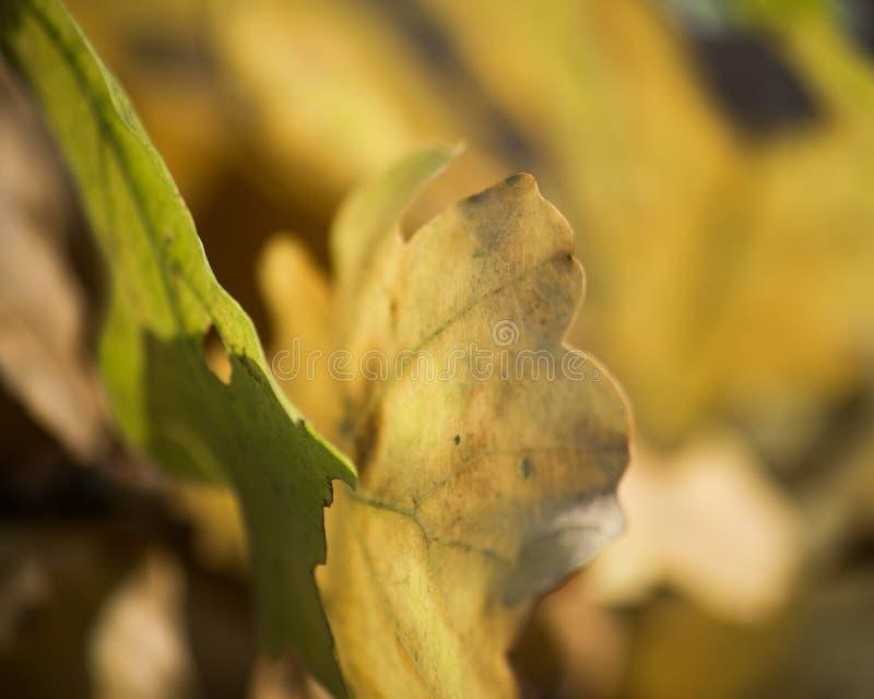 Θολωμένο περίληψη υπόβαθρο των κίτρινων φύλλων φθινοπώρου στοκ εικόνες με δικαίωμα ελεύθερης χρήσης