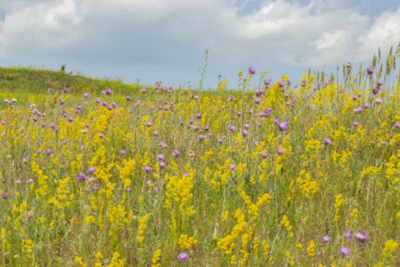 Θολωμένο υπόβαθρο, τοπίο θερινών λιβαδιών που ανθίζει με τα άγρια λουλούδια, κίτρινος ιώδης πράσινος Φωτεινά όμορφα θερινά λουλού στοκ εικόνες