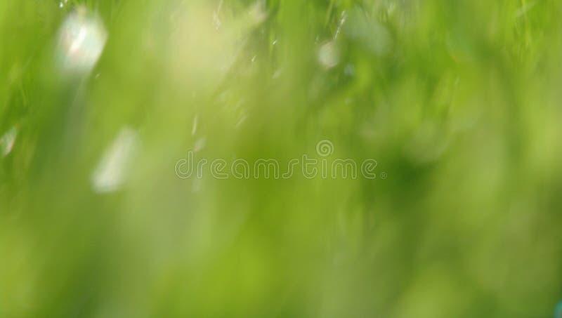 Θολωμένο υπόβαθρο των χαοτικών πράσινων και άσπρων σημείων χλόης στοκ φωτογραφία με δικαίωμα ελεύθερης χρήσης
