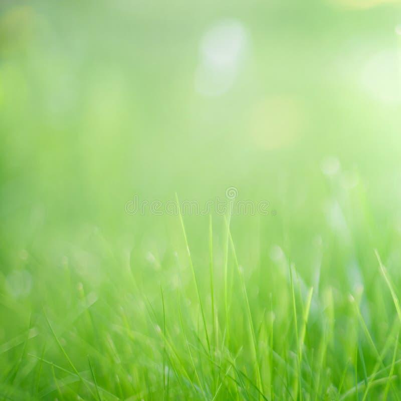 Θολωμένο φύσης υπόβαθρο χλόης θερινής άνοιξης πράσινο στοκ εικόνα με δικαίωμα ελεύθερης χρήσης