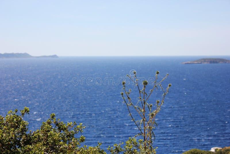 Θολωμένο seascape με τα πράσινα και λουλούδια στο πρώτο πλάνο στοκ φωτογραφία με δικαίωμα ελεύθερης χρήσης