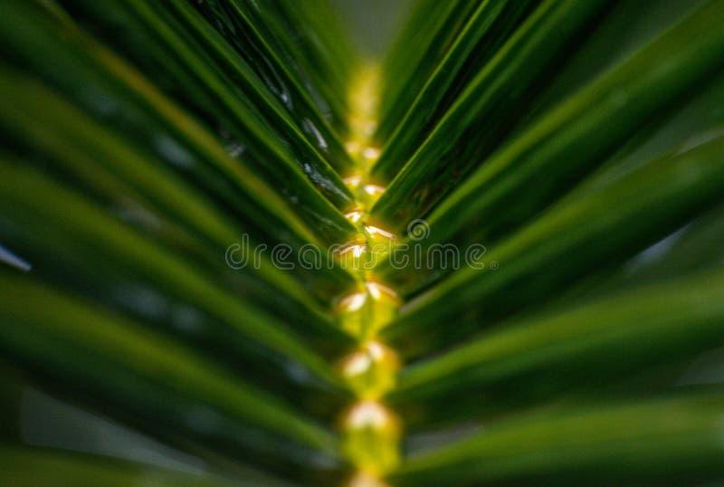 Θολώστε τα φύλλα των φοινίκων στοκ φωτογραφία με δικαίωμα ελεύθερης χρήσης