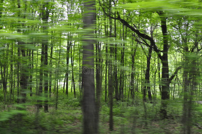 Θολωμένη άποψη δέντρων από το αυτοκίνητο στοκ φωτογραφίες