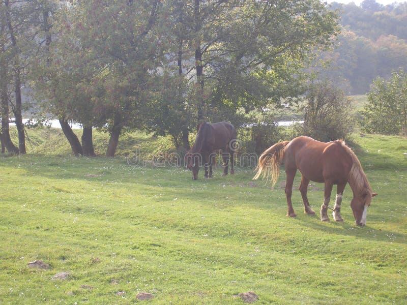 θραύσης χείλων απεικονισμένο ημέρα δάσος ύδατος θερινής επιφάνειας ποταμών ομαλό βόσκοντας άλογα στοκ φωτογραφίες