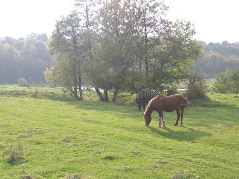 θραύσης χείλων απεικονισμένο ημέρα δάσος ύδατος θερινής επιφάνειας ποταμών ομαλό βόσκοντας άλογα στοκ εικόνες
