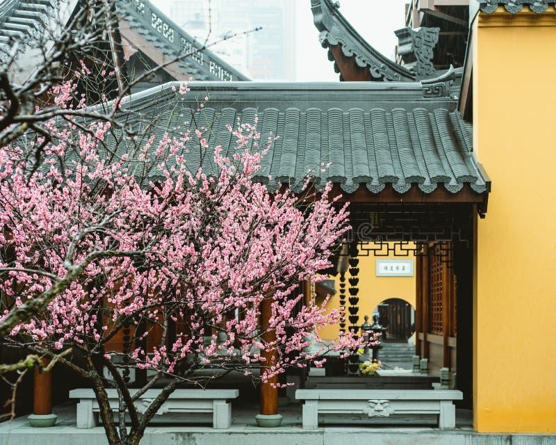 Θρησκευτικός Ksitigarbha βουδισμός ZenTaoτης Σαγκάη Κίνα στοκ εικόνες