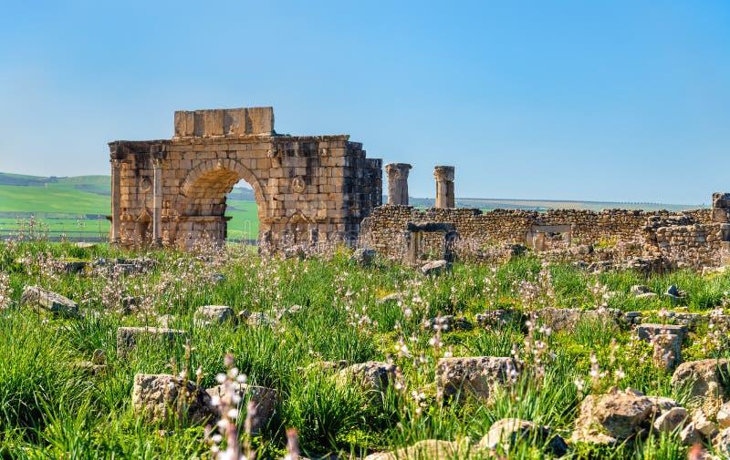Θριαμβευτική αψίδα Caracalla σε Volubilis, μια περιοχή κληρονομιάς της ΟΥΝΕΣΚΟ στο Μαρόκο στοκ φωτογραφία με δικαίωμα ελεύθερης χρήσης
