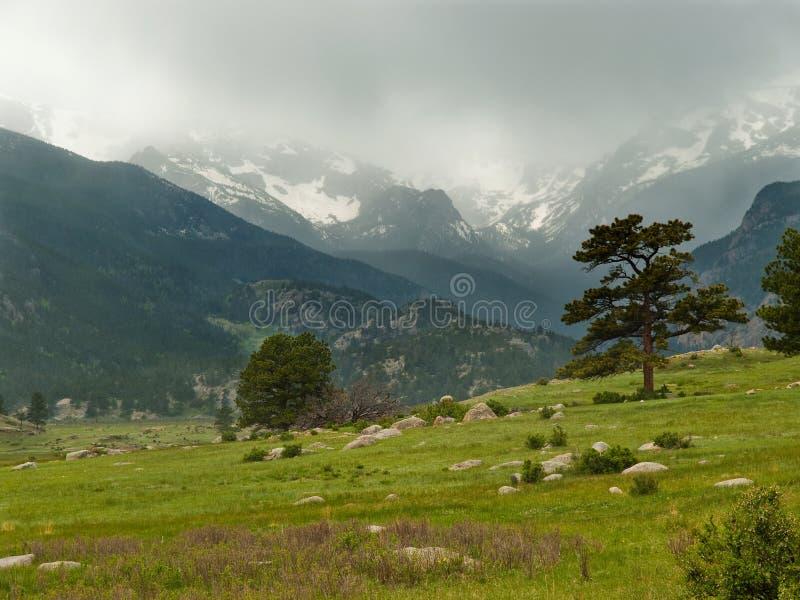 Θυελλώδες λιβάδι βουνών στοκ φωτογραφία με δικαίωμα ελεύθερης χρήσης