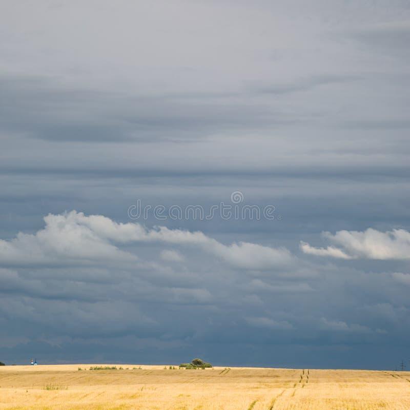 Θυελλώδης ουρανός πέρα από έναν τομέα του σίτου στοκ εικόνες